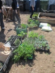 """""""Growing your own food is like printing your own money."""" -- Ron Finley."""