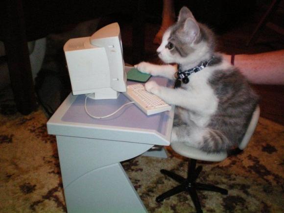 l-Computer-cat